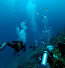 Diving Finger Reef, Guam